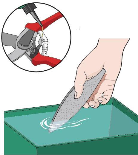 Quando si puliscono le cesoie, ungere bene la molla. Per garantire il pieno funzionamento del taglio, si possono ravvivare le lame con la pietra cote (da ripassare su tutti gli attrezzi da taglio) che prima dell'utilizzo deve essere bagnata.