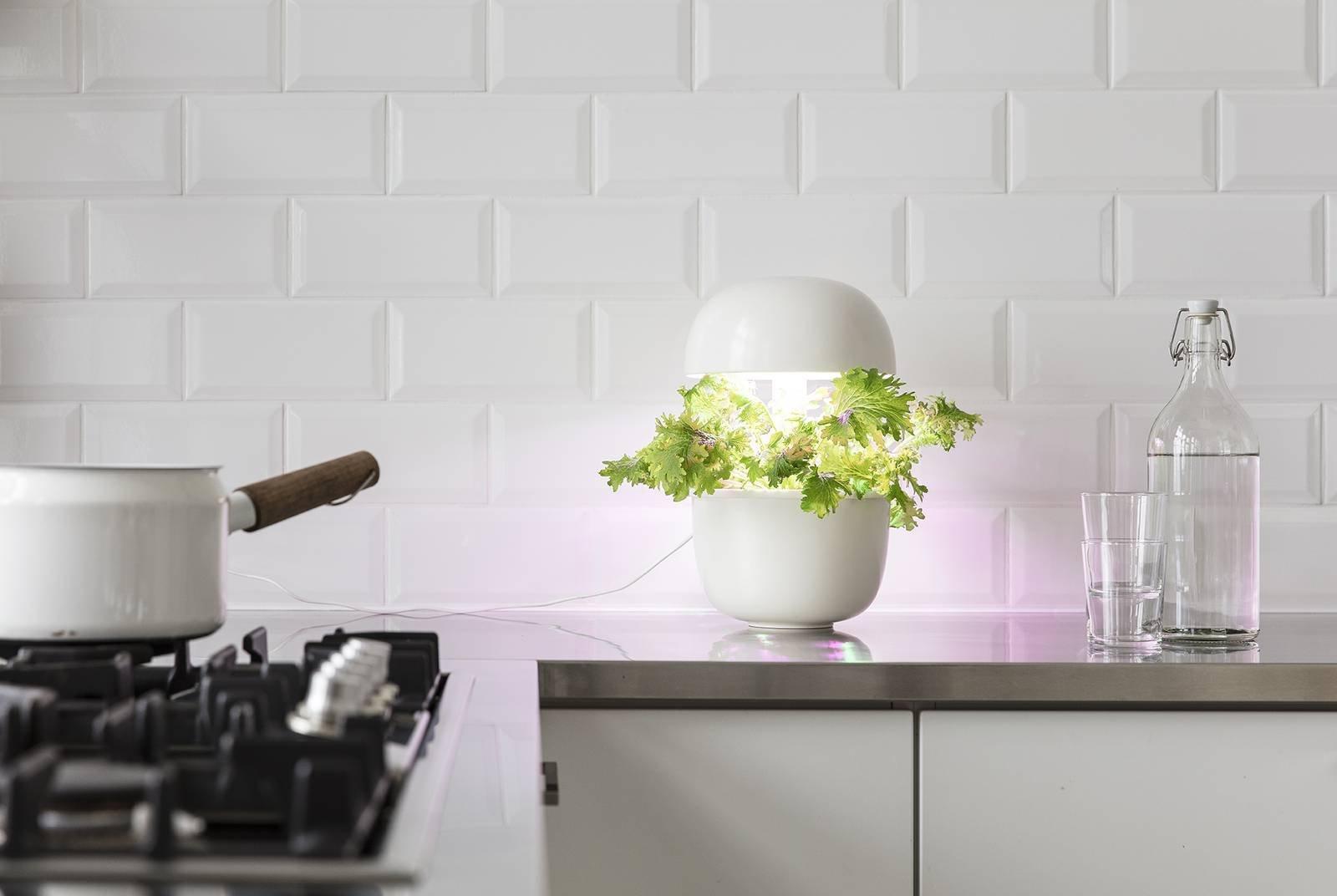 Plantui italia vasogiardinaggiohomi cose di casa for Puoi ottenere un mutuo a terra