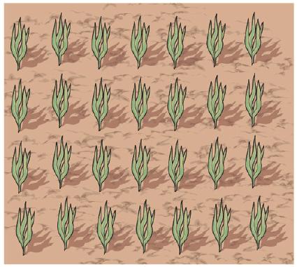 1. Per mettere a dimora l'aglio in dieci metri quadrati, occorrono circa 0,8/1,2 kg di bulbilli. Piantare a una profondità di 2 cm nei terreni compatti, 4 cm in quelli sciolti.