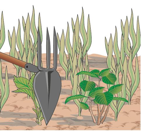 2. In terreni pesanti con difficile drenaggio, è conveniente creare, al momento dell'impianto, aiuole sopraelevate. Questo permette un migliore drenaggio.
