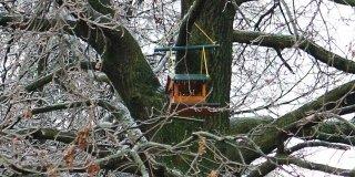 Costruire una casetta per gli uccellini