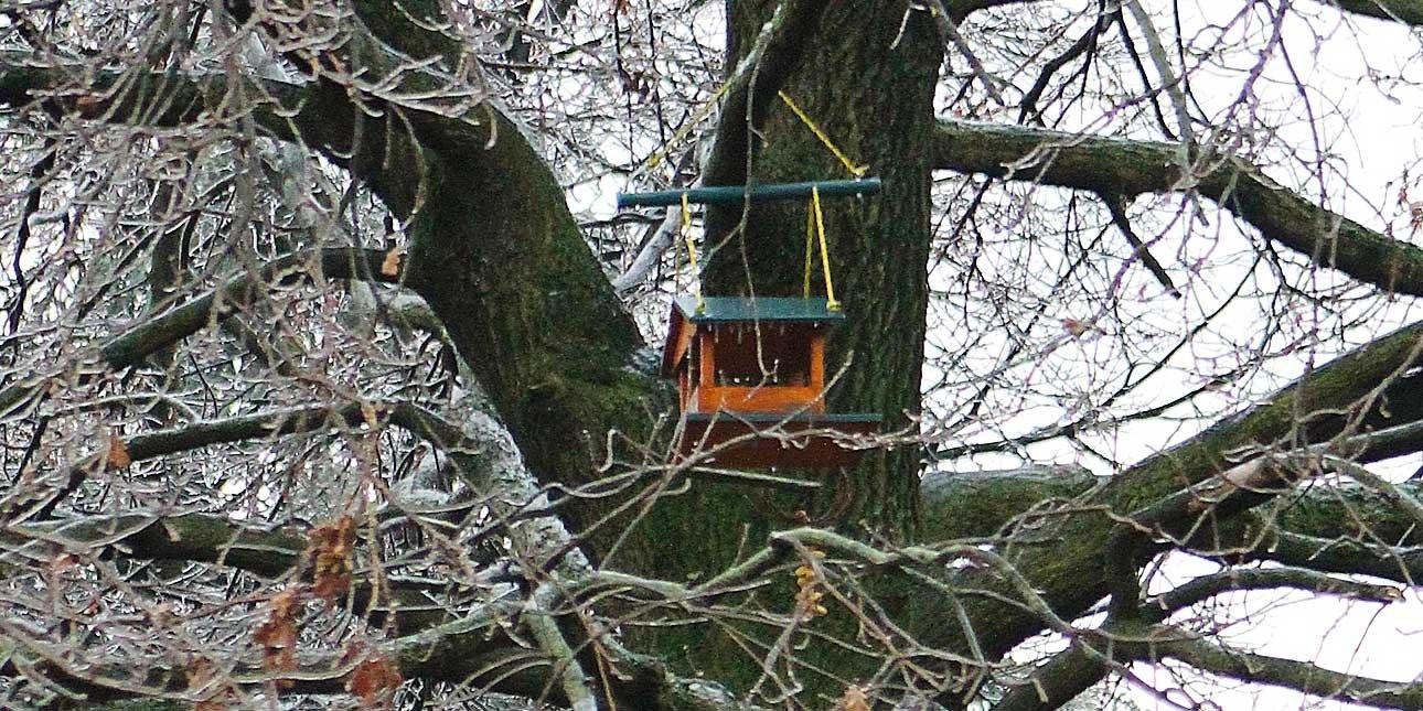 Costruire una casetta per gli uccellini cose di casa for Registrare gli stili di casa