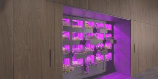 Cucina green: l'orto in casa con il programma Kitchen Garden Revolution