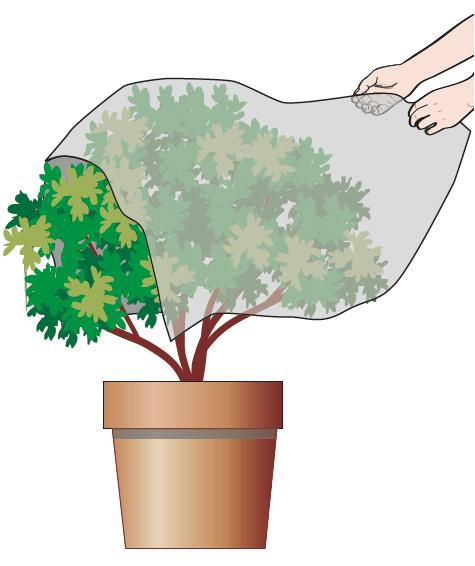 Ripulire il telo che può essere riutilizzato l'anno prossimo e riporlo in modo da averlo pronto per la fine dell'autunno.