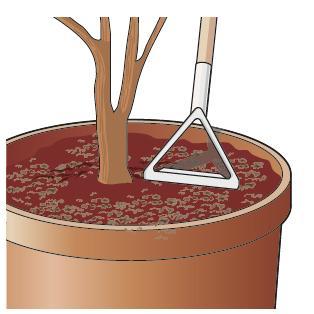 6. Al termine dei lavori del mese spargere piccole quantità di concime organico (letame maturo anche in pellet) e interrare con una leggera zappatura, operazione che permetterà di far giungere più velocemente il nutrimento alle radici delle piante.
