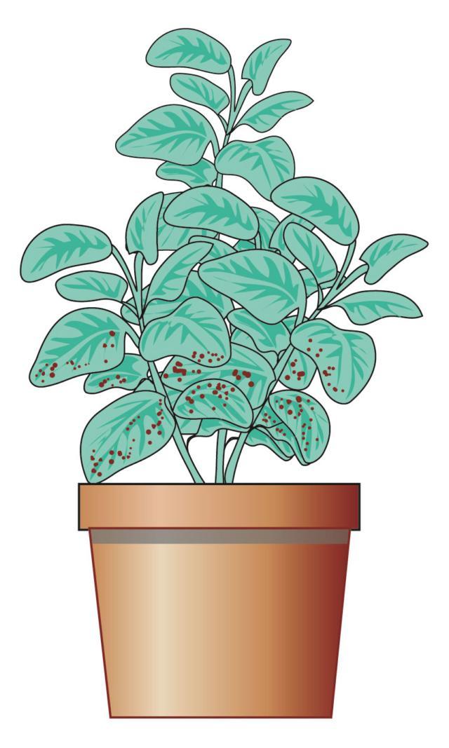 3. Anche se la pagina superiore delle foglie è brillante, si controlli la parte retrostante della lamina: molti parassiti si annidano proprio lì, e possono propagarsi, una volta a casa, sulle piante già in nostro possesso.