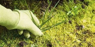 Cominciare a togliere le erbe infestanti