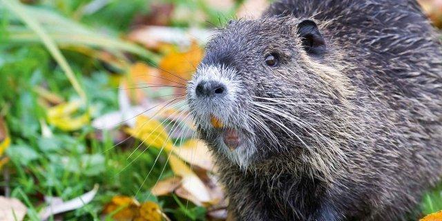 Incontro con gli animali selvatici: che fare?