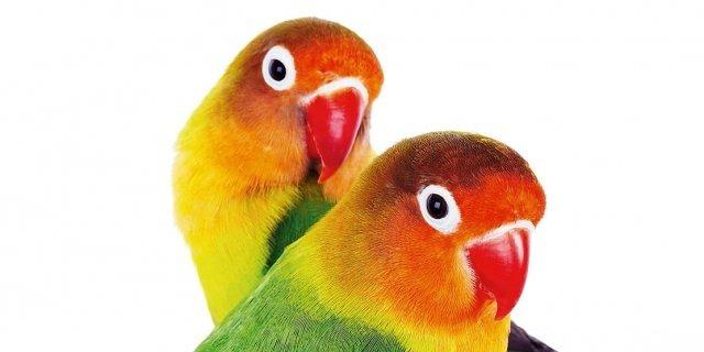 Il mangime giusto per i pappagalli di casa