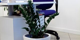 Quali piante in ufficio e in sala d'attesa