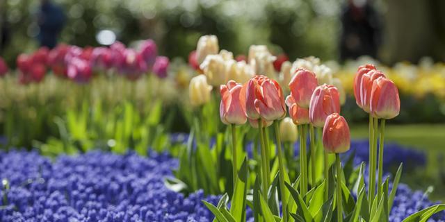 Fiori e piante: gli appuntamenti di marzo