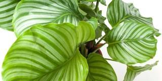Regole per acquistare le piante da interni