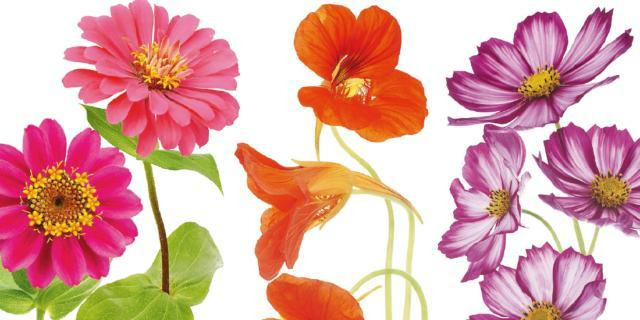 Seminare adesso i fiori per l'estate