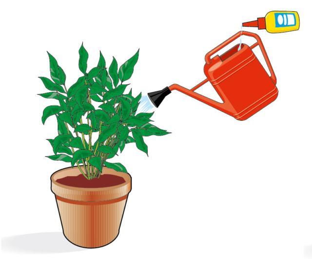 1. I concimi liquidi sono concentrati e, prima di essere usati, devono essere diluiti nell'acqua d'irrigazione e poi forniti al terreno con l'innaffiatoio: la pianta assorbirà gli elementi nutritivi immediatamente, attraverso le radici. In etichetta si specifica sempre la dose da diluire in acqua (le confezioni sono solitamente dotate di tappino dosatore) e la frequanza con cui fornirlo alla pianta (di solito ogni 10 giorni circa).