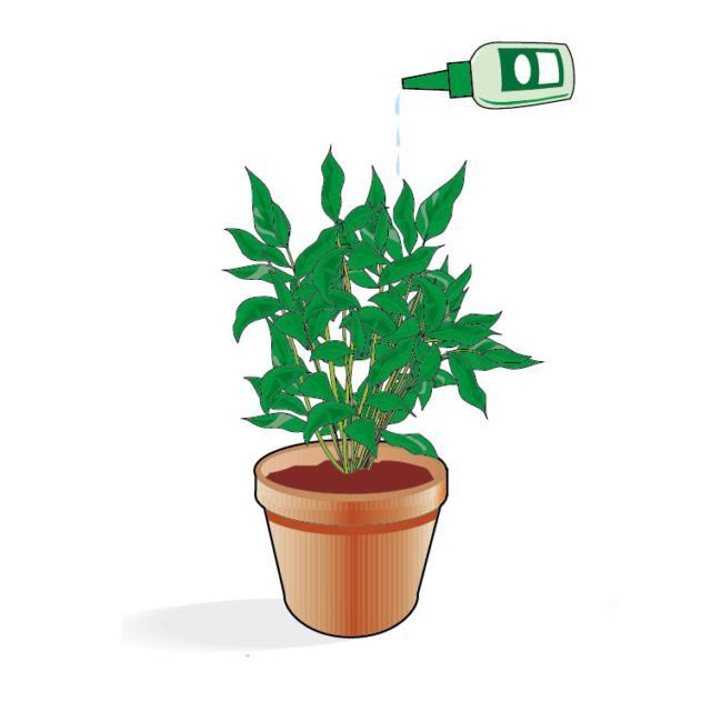 2. Il concime per le piante in forma liquida di ultima generazione è già pronto all'uso e non deve essere diluito in acqua. Basta versarne qualche goccia, tal quale, nel terreno, seguendo le indicazioni in etichetta.