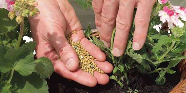Il concime per le piante in vaso