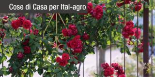 Proteggere le piante: istruzioni per l'uso