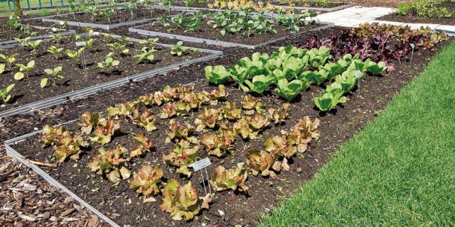 Rotazione delle colture: solo vantaggi