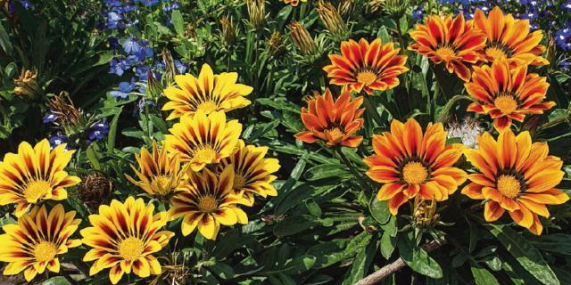 La bordura fiorita al sole