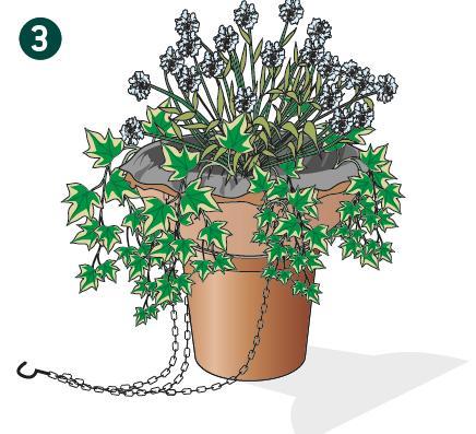 3. Nella composizione la pianta più alta andrà posizionata al centro, per dare slancio all'insieme, e le altre intorno all'orlo del cestino per equilibrare e dare simmetria alla composizione.