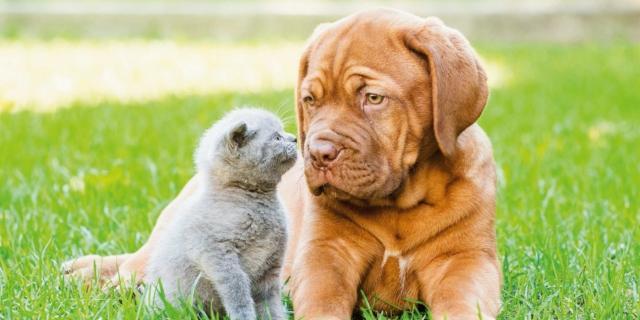 Cane e gatto all'aperto senza pericoli