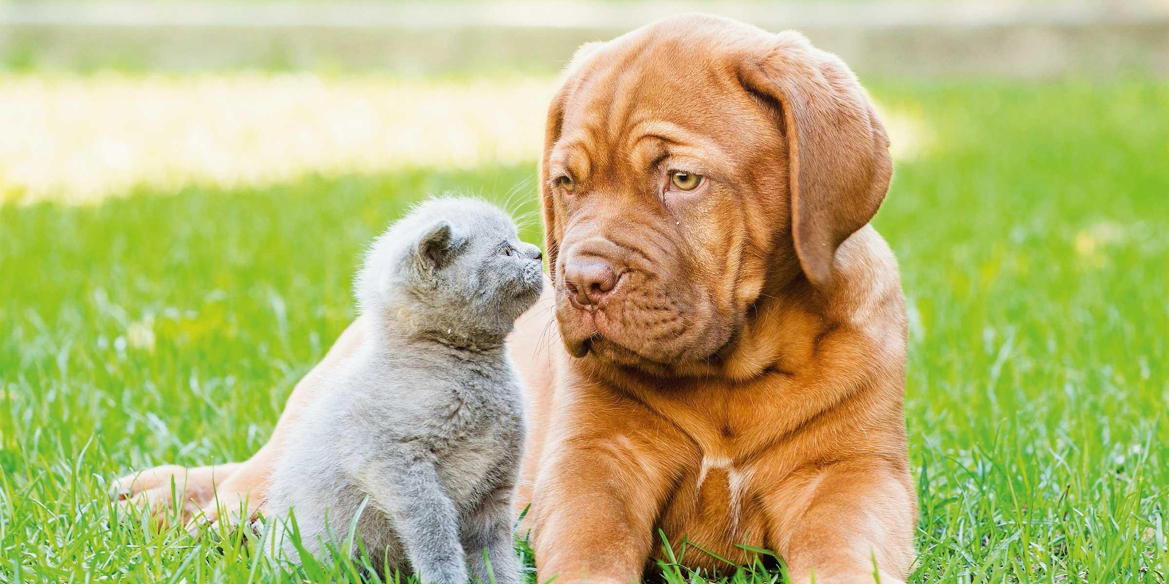 Cane E Gatto Allaperto Senza Pericoli Cose Di Casa