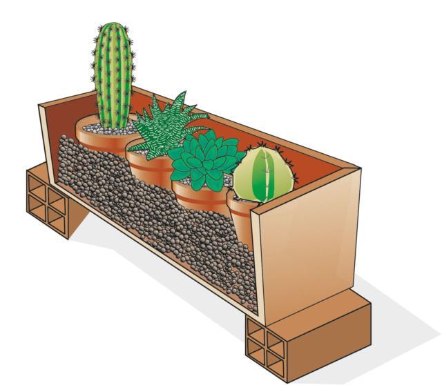 Le piante grasse e altre piante con esigenze simili possono essere raggruppate in contenitori riempiti con argilla espansa.
