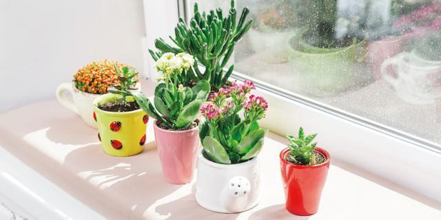 Spostare all'aperto le piante da appartamento