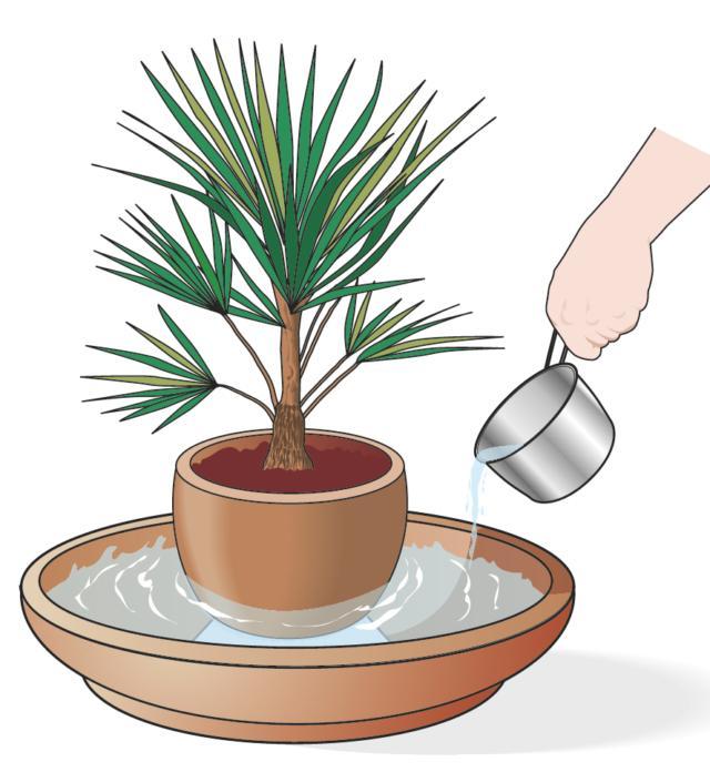 Se ci si assenta per un periodo, predisporre un sottovaso grande o addirittura una bacinella contenente acqua, inserire un elemento per sopraelevare la pianta e appoggiarci sopra il vaso in modo che non sia immerso nell'acqua. In tal modo, l'acqua evapora creando un ambiente gradito alle piante. Inoltre, conviene radunare le piante in un unico locale, avvicinandole le une alle altre, poiché la naturale evaporazione delle foglie reca un vantaggio comune.