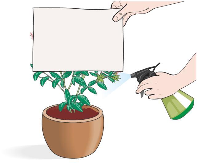 Durante l'irrorazione è bene evitare di bagnare gli eventuali fiori: basta proteggerli con un cartoncino o lastra di plastica; dirigere lo spray solo sulle foglie.
