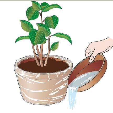 I vasi di terracotta sono molto belli e durevoli però, essendo la terracotta un materiale poroso, trattengono meno acqua rispetto a quelli di plastica o resina. Così il terriccio si asciuga più velocemente e la pianta ha meno tempo per assorbirla. Un trucco è quello di avvolgere il vaso tutto intorno con un sacchetto di plastica nei giorni più caldi, togliendo l'acqua residua solo a sera inoltrata.