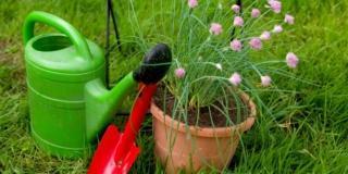 Annaffiare i vasi: strategie anti-caldo