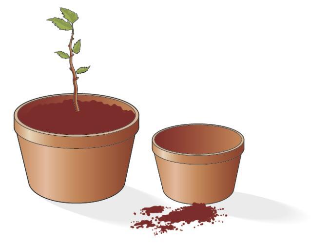 3. Passato l'inverno, la giovane piantina radicata dovrà essere rinvasata in un vaso di dimensioni più grandi (di almeno 10 cm di diametro), dove riprenderà il suo sviluppo e la sua crescita fino a divenire una pianta ben formata e in grado di fiorire.