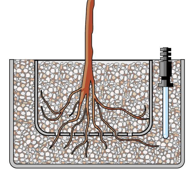 2. Si prepara il contenitore più interno, che si presenta di plastica trasparente con molti fori su ogni superficie, mettendo uno strato di argilla espansa di 2 cm. Poi si inserisce la pianta e si colma con altra argilla espansa, evitando di lasciare delle intercapedini vuote intorno alle radici. Nel vaso esterno, più grande con le pareti senza fori, si stende uno strato di 3 cm di argilla espansa e vi si appoggia sopra il contenitore già pronto. Quindi si colma lo spazio tra i due con la restante argilla. Posizionare anche l'indicatore del livello dell'acqua. Infine si aggiunge l'acqua nel contenitore esterno fino a raggiungere l'altezza massima sull'indicatore di livello.