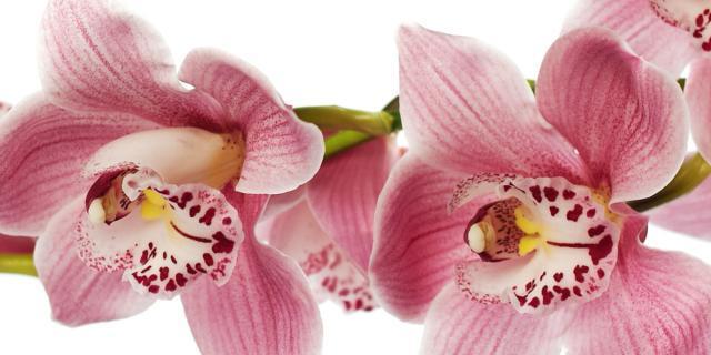 Le orchidee adesso riposano