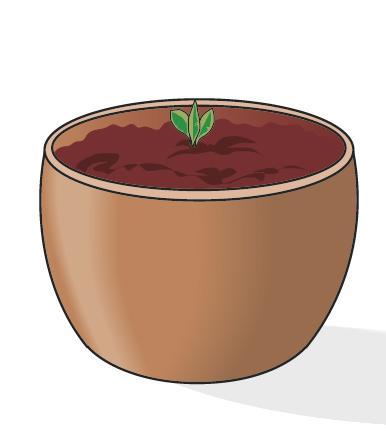 Dopo un mese, alla base della foglia inizierà a spuntare un nuovo piccolo germoglio, che, sviluppandosi lentamente, darà origine a una nuova pianta. Una volta che questa avrà raggiunto il giusto grado di sviluppo, potrà essere staccata da quel che rimane della foglia utilizzata come talea, e rinvasata in un vaso poco più grande (10-12 cm). Da qui in avanti, la giovane violetta africana potrà essere trattata come una normale pianta adulta. Le sue caratteristiche morfologiche, tra cui il colore dei fiori, saranno identiche a quelle della pianta-madre dalla quale è stata prelevata la foglia utilizzata come talea.