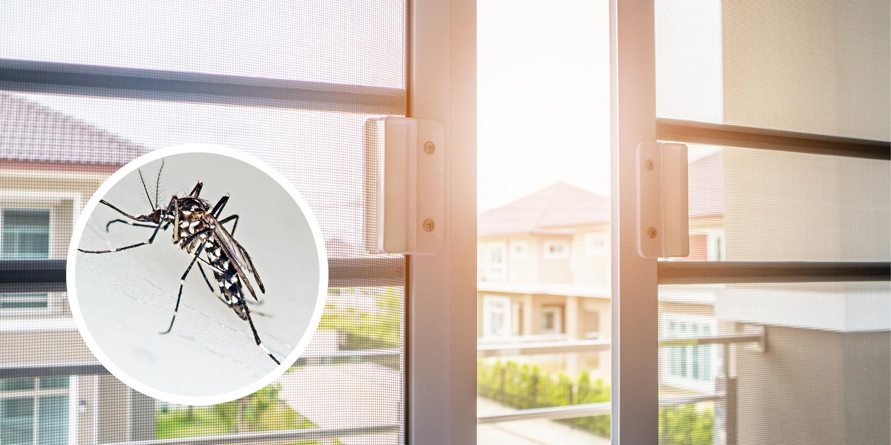Prodotti Contro I Gechi come tenere lontane le zanzare - cose di casa