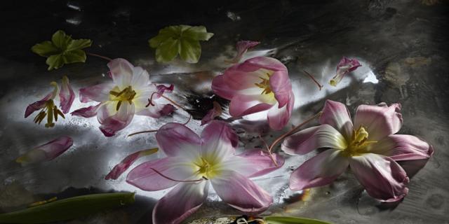 Mario Carrieri. Amata bellezza, fiori e visioni a Villa Carlotta