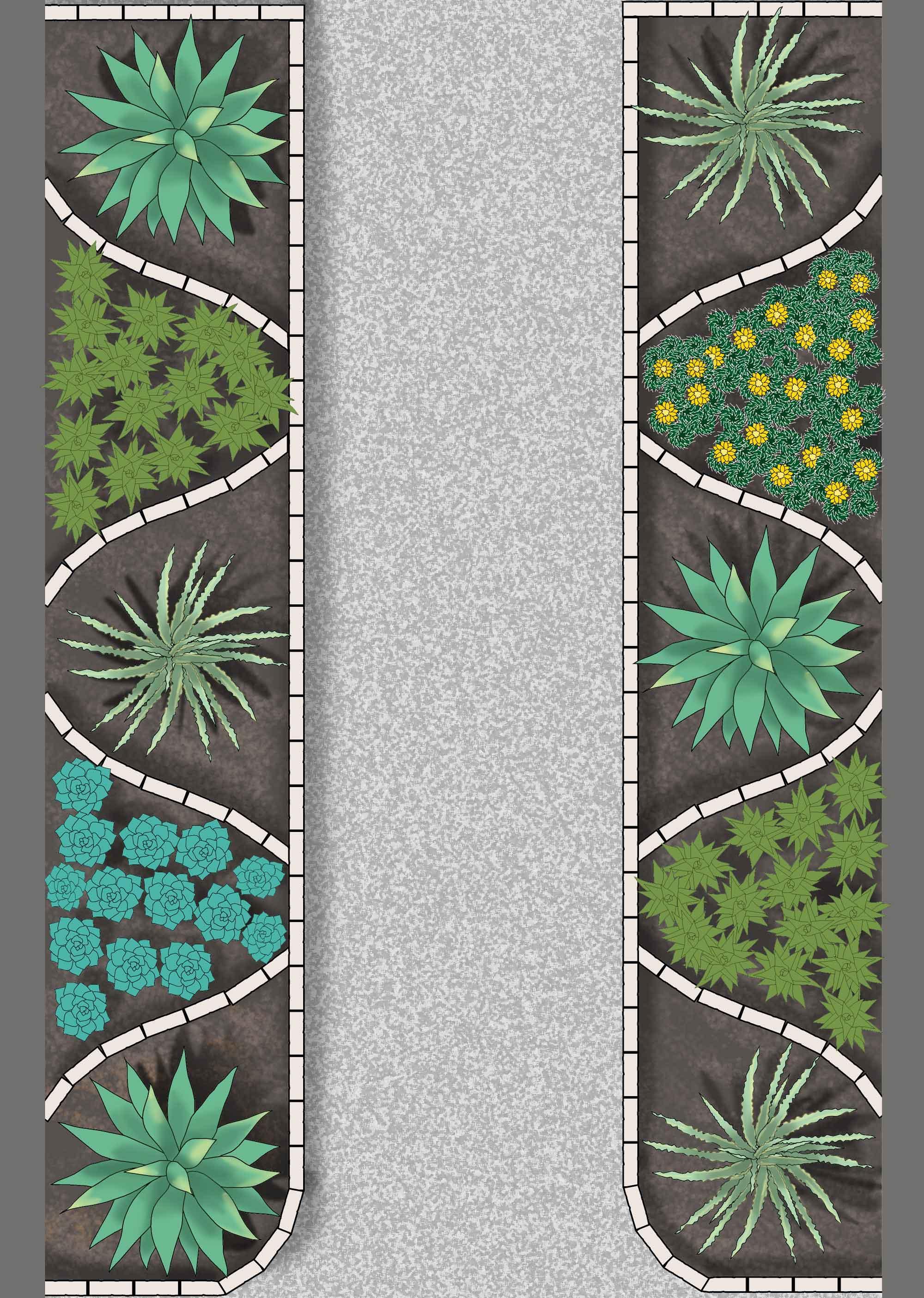 Realizzare due aiuole di piante grasse in cortile cose for Piante da aiuola