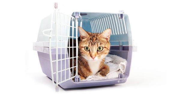 Il gatto in viaggio