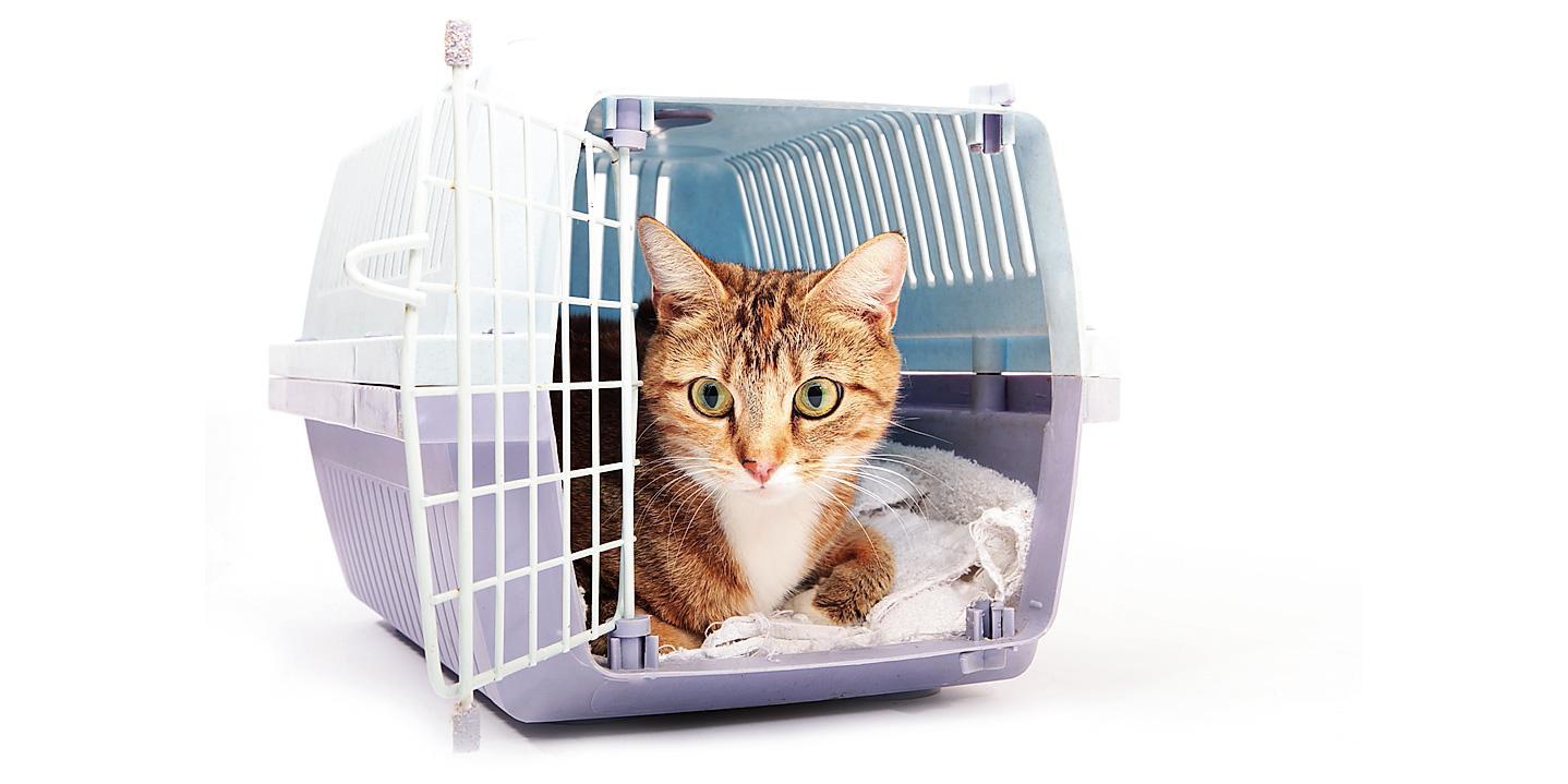 Rete Per Gatti Condominio il gatto in viaggio: come trasportarlo, documenti