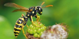 Trappole contro gli insetti fastidiosi
