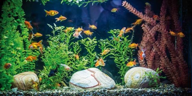 acquario in casa