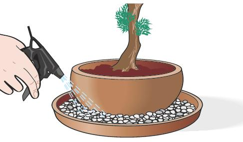 Si bagni il terreno solo quando si è asciugato rispetto alla bagnatura precedente. Si riempiano i sottovasi con la ghiaia che, inumidita, favorisce il controllo e il mantenimento del microclima necessario.