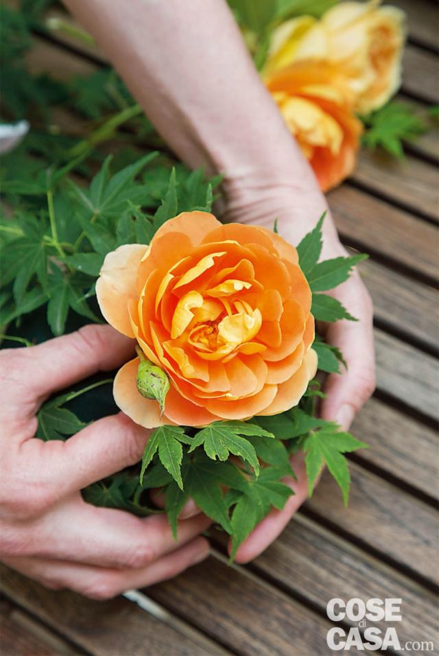 5. Iniziare a inserire i fiori in tazza. Per prima cosa  le 4 Rosa 'Pat Austin', più scure, mettendone una al centro e le altre 3 ai lati, a diverse altezze, sempre tenendo i fiori inclinati e senza affondarli troppo nella spugna.