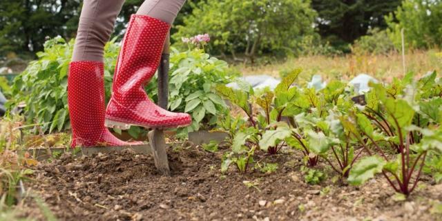 Lavorazioni nell'orto a fine stagione