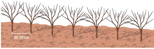 recinzione-arancio-trifogliato
