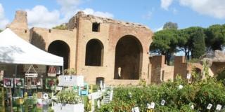 Terme di Traiano a Civitavecchia -terme-in-fiore