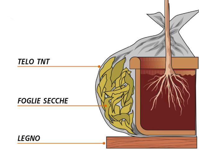 Il contenitore andrà a questo punto avvolto in un involucro di tnt, oppure di iuta o di qualche materiale di recupero come stracci o pluriball. Con il freddo più intenso, se possibile, collocare come imbottitura tra il vaso e la protezione, del materiale pacciamante per esempio un po' di foglie secche che aiutino a smorzare la percezione degli sbalzi di temperatura da parte della pianta.
