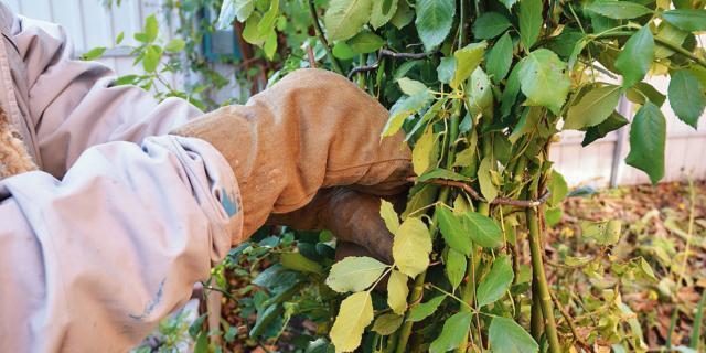 Curare la siepe: otto lavori indispensabili